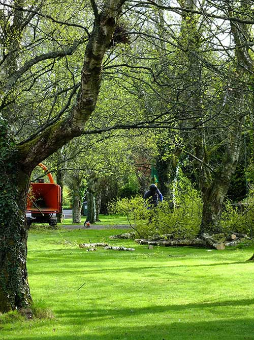 Western Properties Tree Surgery